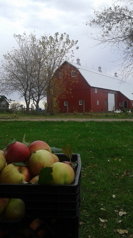 apple-picking-with-sarah-006